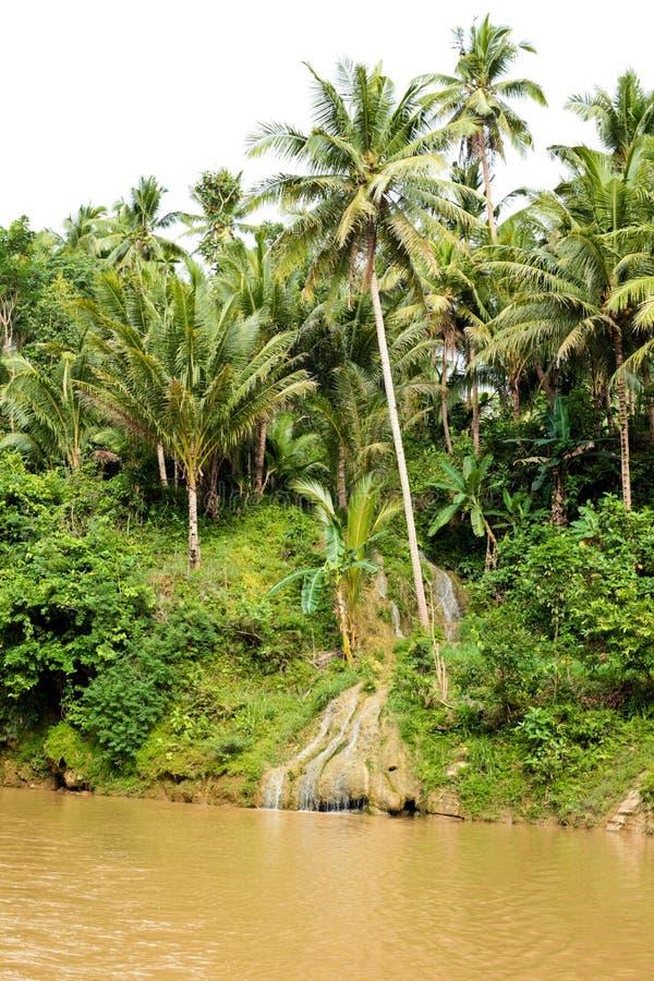 Arbres de noix de coco image libre de droits
