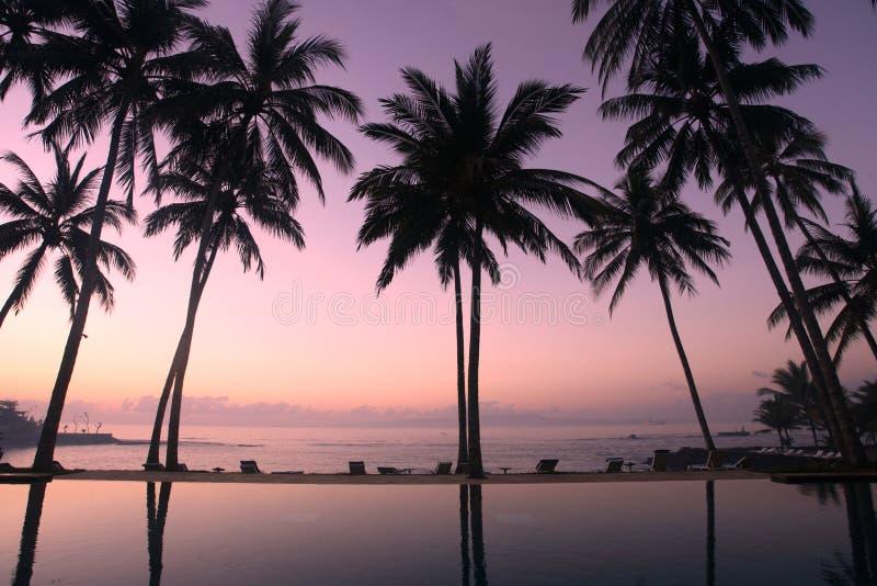 Arbres de noix de coco au lever de soleil photographie stock libre de droits