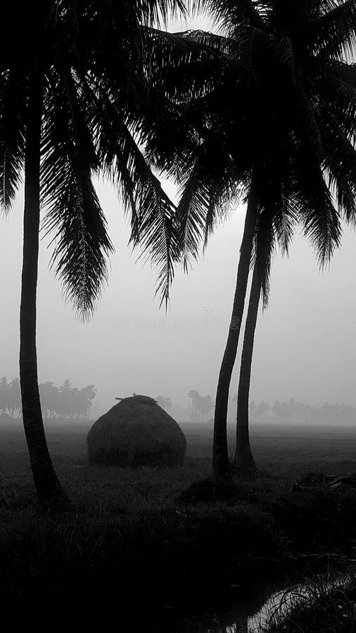 Arbres de noix de coco dans le silhoutte photographie stock