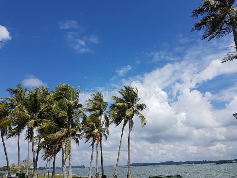 Arbres de noix de coco et ciel nuageux photo stock