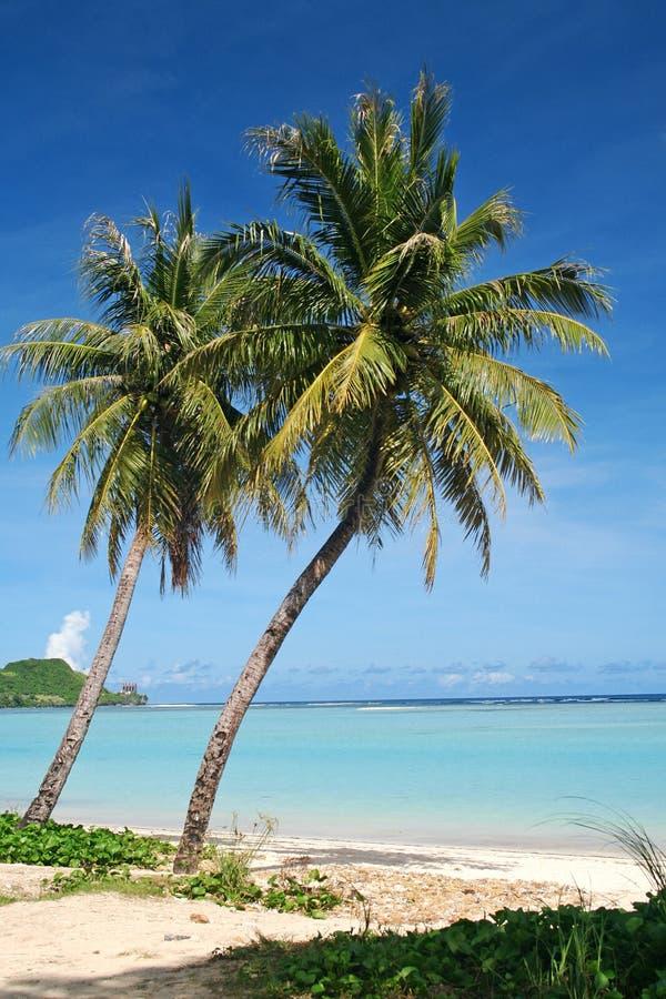 Arbres de noix de coco tropicaux de la Guam images libres de droits