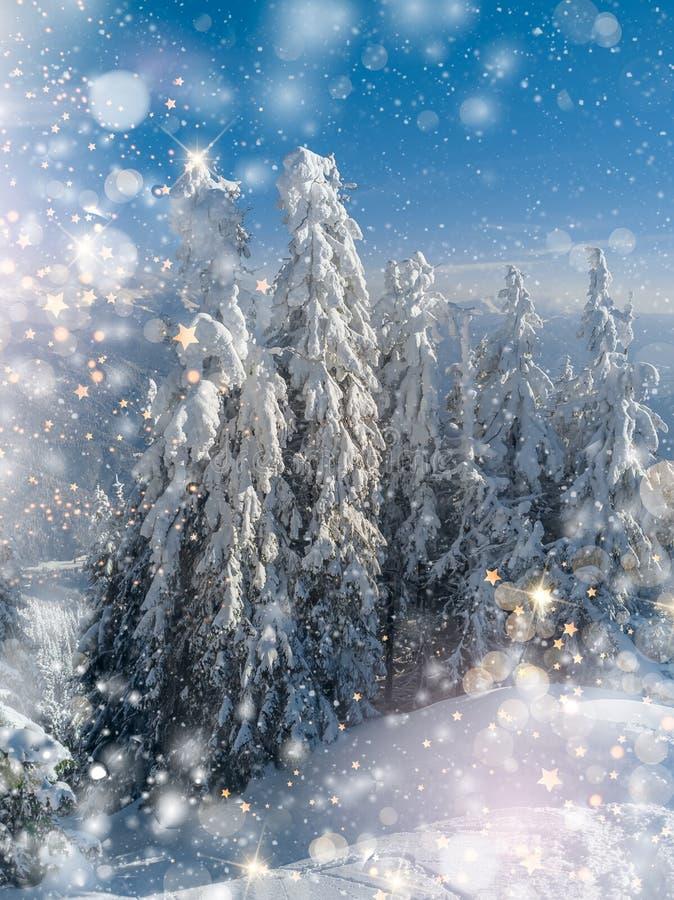 Arbres de paysage de Wnter à la gelée, à l'arrière-plan de Noël avec quelques points culminants doux, aux étoiles d'or et aux flo photos libres de droits