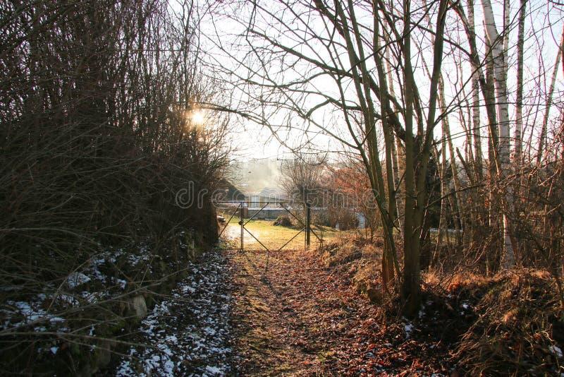 Arbres de porte du soleil d'hiver photographie stock libre de droits