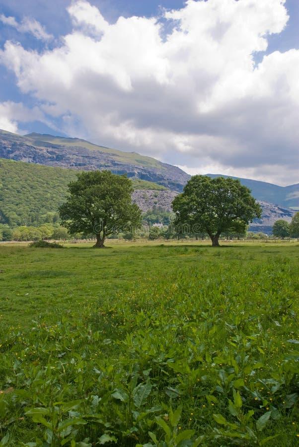 arbres de pré photographie stock libre de droits
