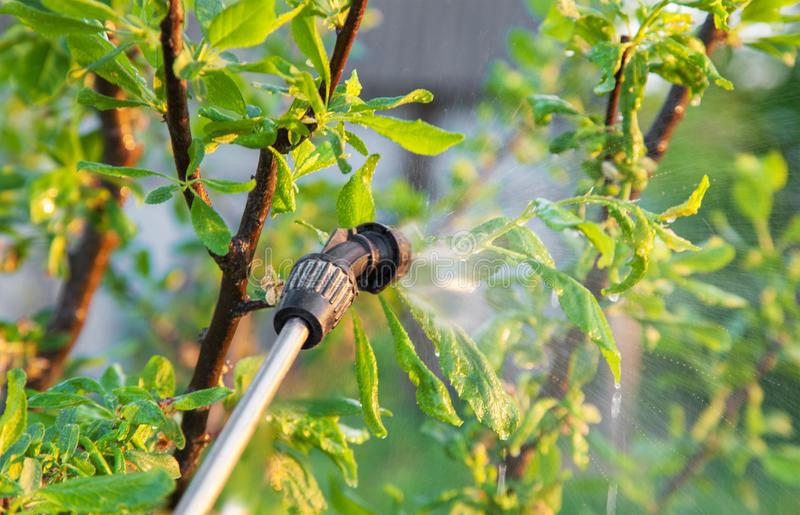 Arbres de pulvérisation avec des pesticides photographie stock libre de droits