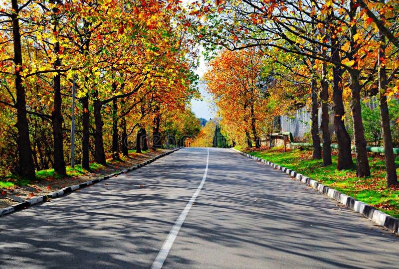 Arbres de route goudronnée et d'automne photos stock