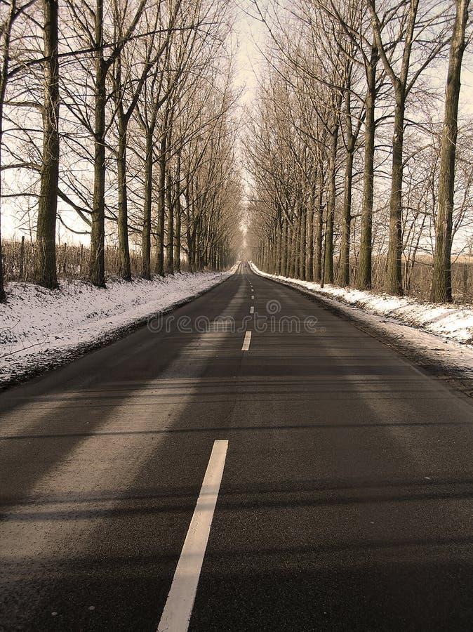 arbres de ruelle image stock