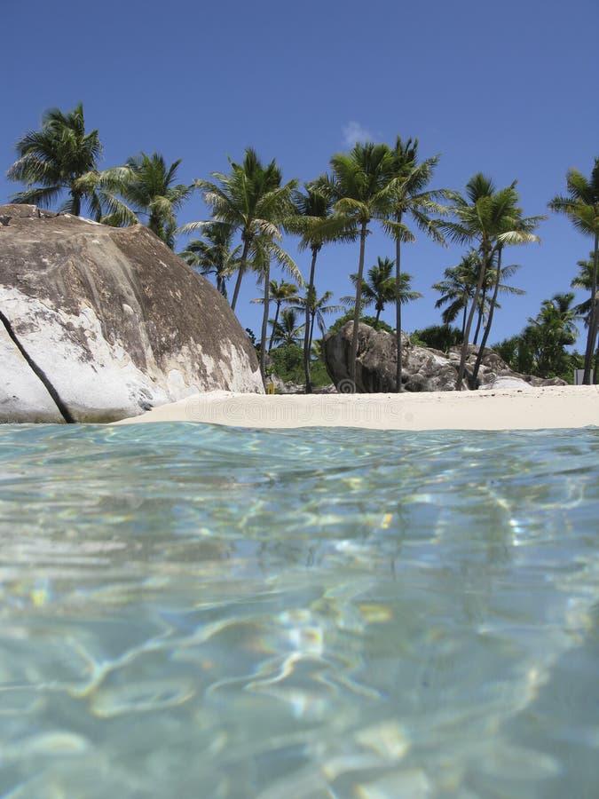 arbres de scène de paume de plage images libres de droits