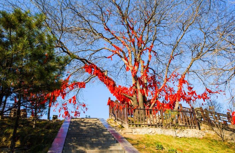 Arbres de scène-prière de Taï-Yuan de temple de Kaihuo photo stock
