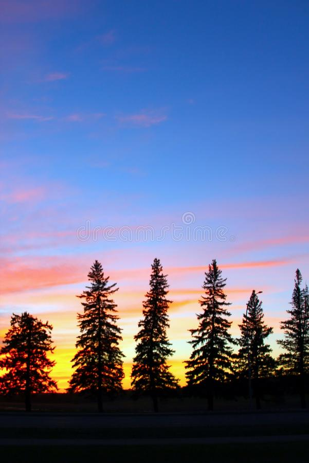Arbres de silhouette de coucher du soleil au crépuscule, Brandon, Manitoba photo stock