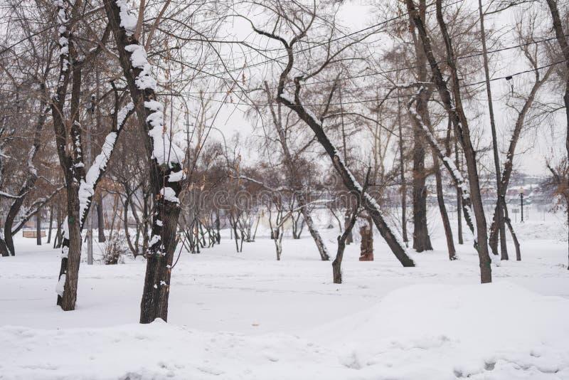 Arbres de Wither avec la neige dans la forêt congelée en hiver image libre de droits
