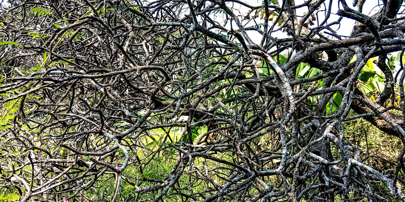 Arbres dont les tiges ressemblent à des racines image libre de droits