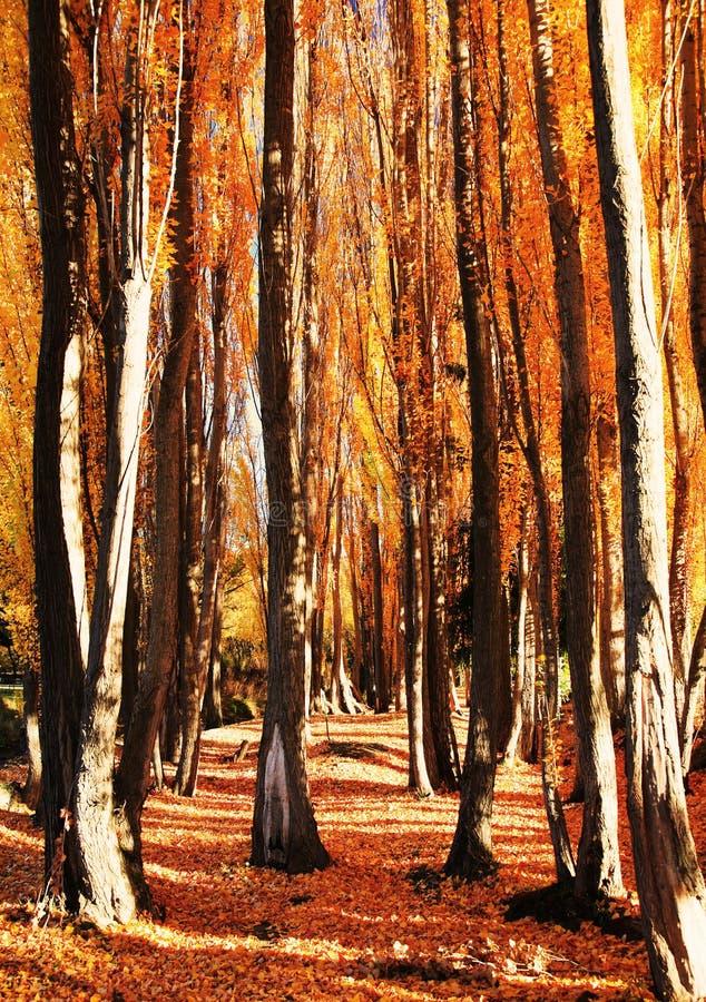 Arbres en automne images libres de droits