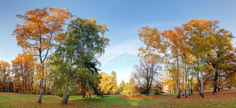 Arbres en Autumn Park photographie stock