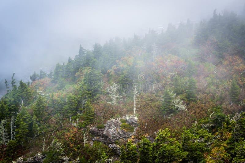 Arbres en brouillard, à la montagne première génération, la Caroline du Nord photographie stock