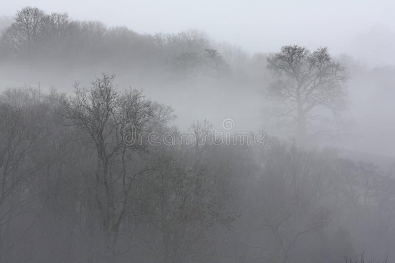 Arbres en brouillard image stock