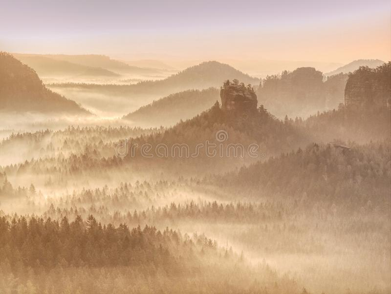 Arbres en brouillard et soleil un matin tôt d'automne photos libres de droits