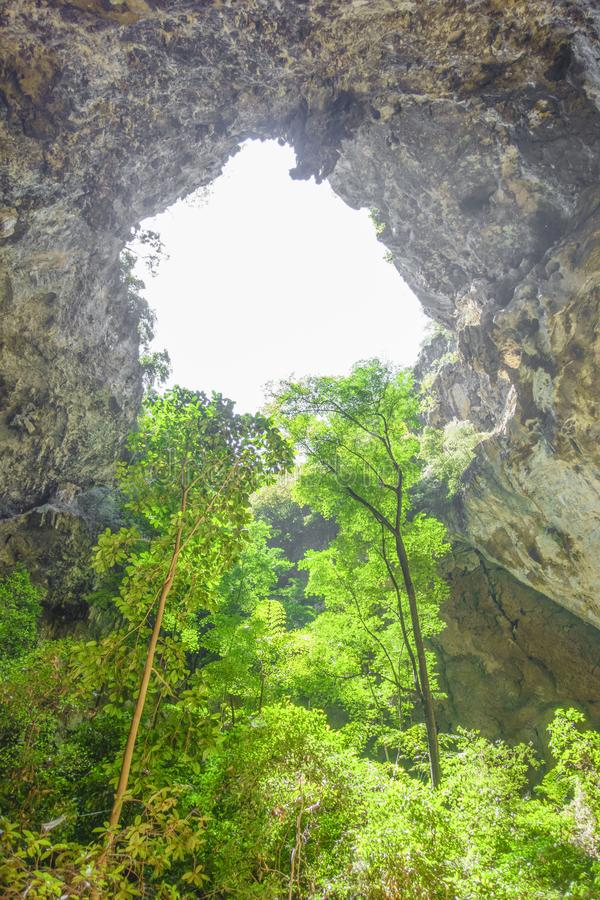 Arbres en caverne image libre de droits