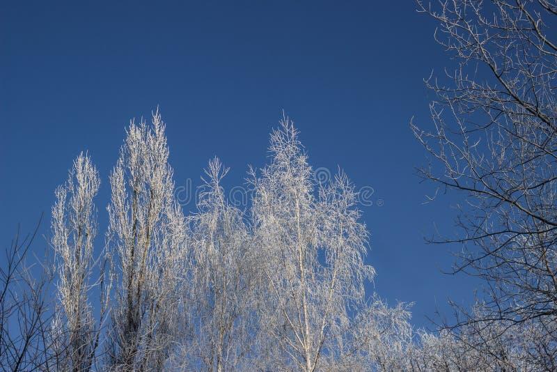 Arbres en gelée photographie stock