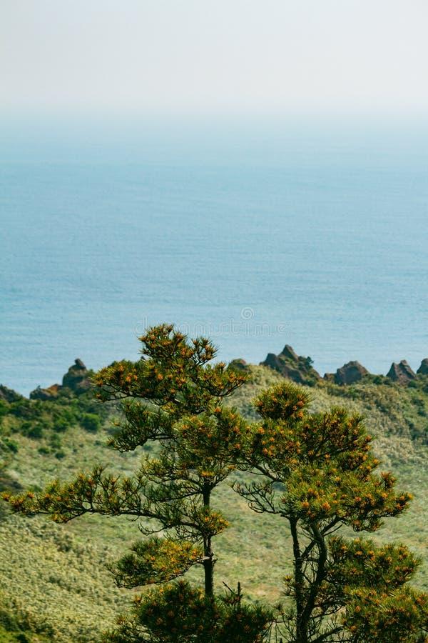Arbres en haut de Seongsan Ilchulbong image stock