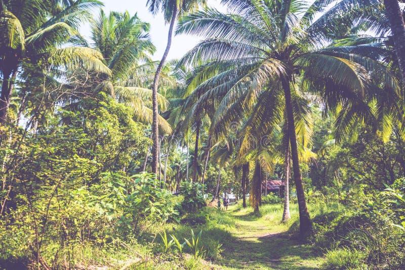 Arbres en masse croissants dans une palmeraie photographie stock libre de droits