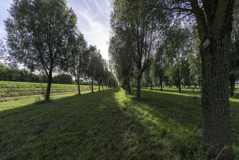 Arbres en parc image libre de droits