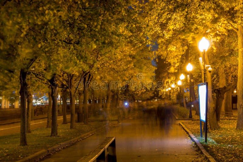 Arbres en parc avec des lanternes de lumières de soirée images libres de droits