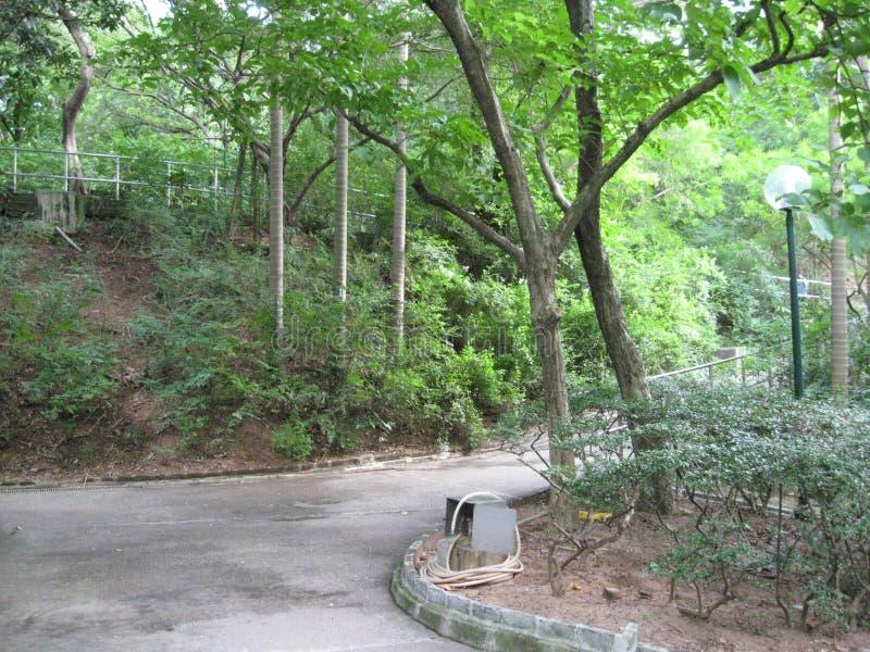 Arbres en parc de Kowloon, Hong Kong photo stock