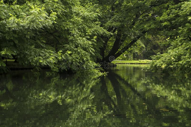 Arbres en parc reflété dans l'étang photos stock