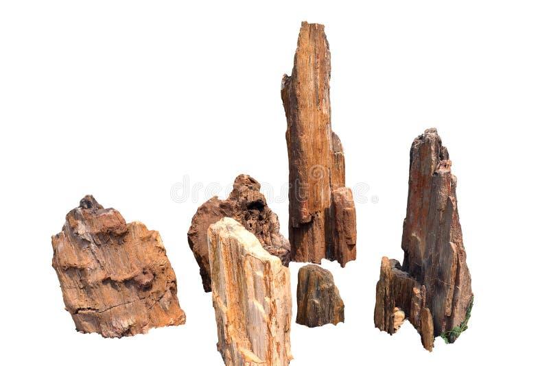 Arbres en pierre, forêt pétrifiée, bois pétrifié, d'isolement sur le fond blanc photo stock