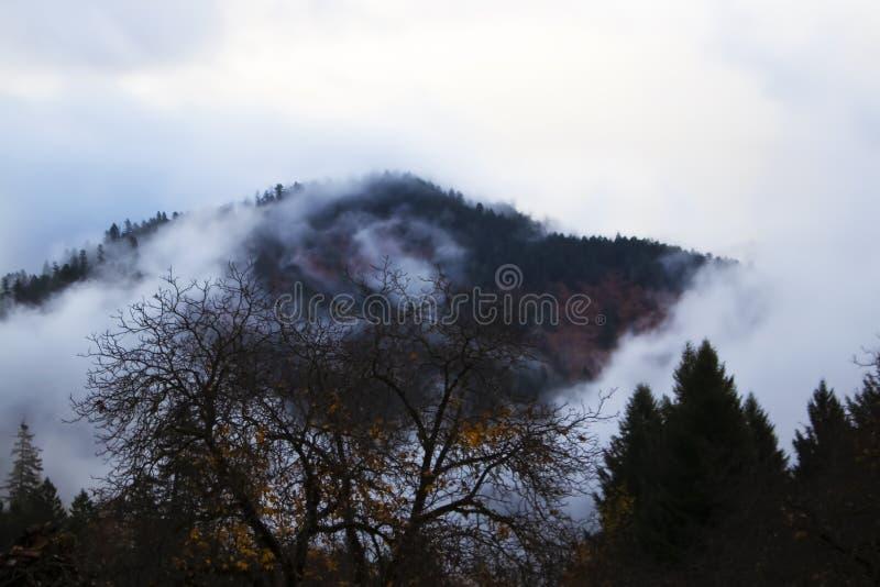 Arbres en retard nus d'automne décrits contre des montagnes avec le brouillard tourbillonnant en cercles images stock