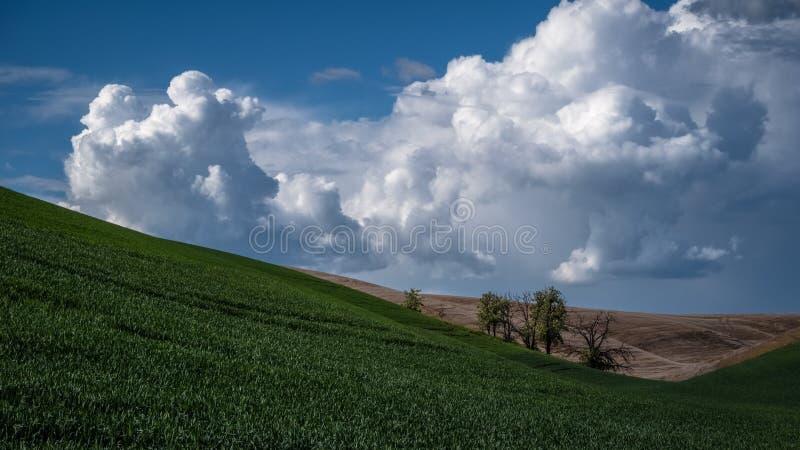 Arbres entre les collines dans le Palouse images stock
