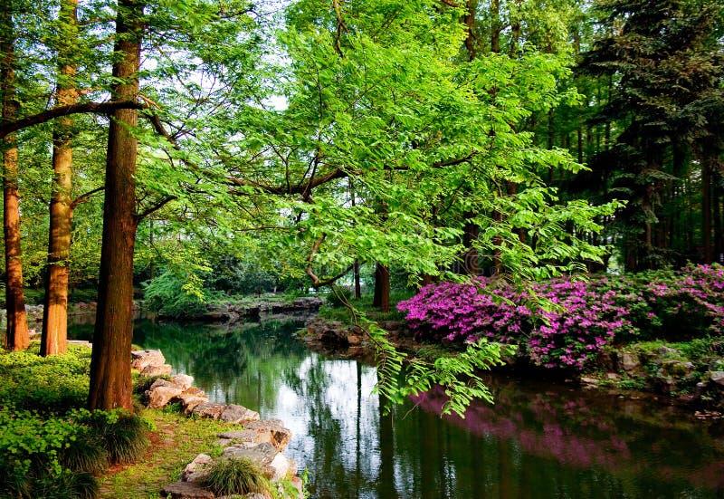 Arbres et étang verts image libre de droits