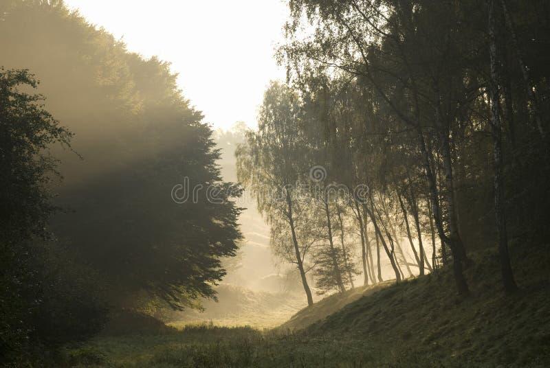 Arbres et brouillard images libres de droits