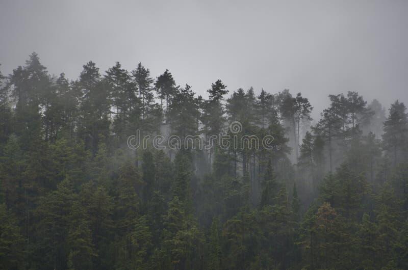 Arbres et brouillard photographie stock libre de droits