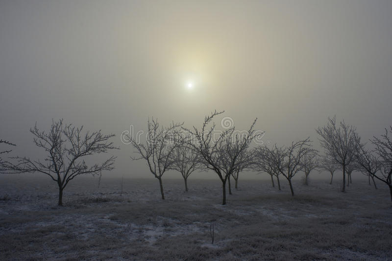 Arbres et brouillard congelés 01 images libres de droits
