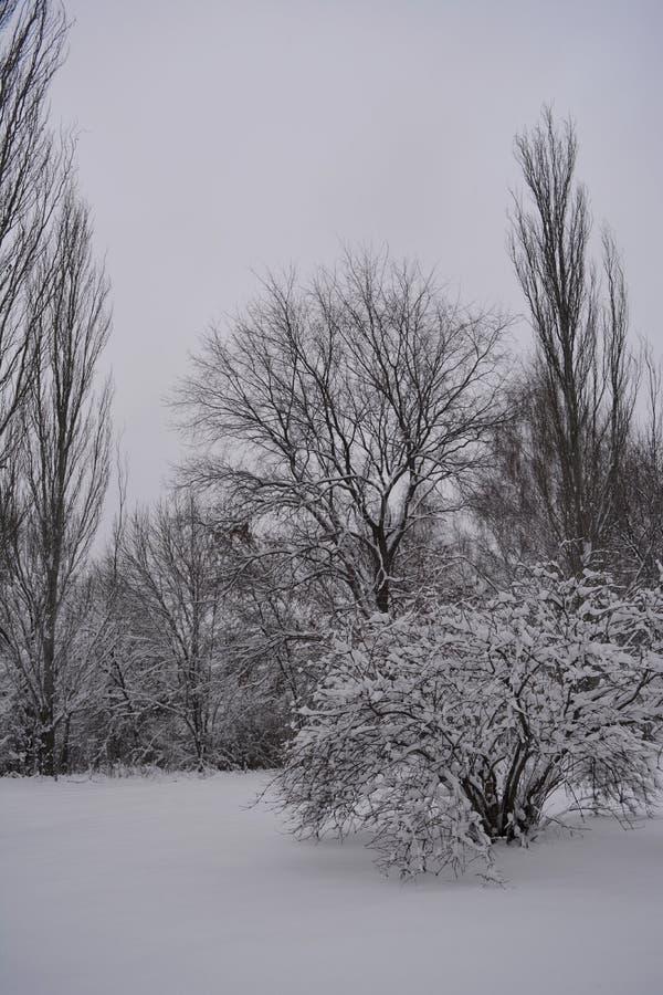 Arbres et buissons de Milou en parc de ville Paysage d'hiver dans le jour gris nuageux photographie stock