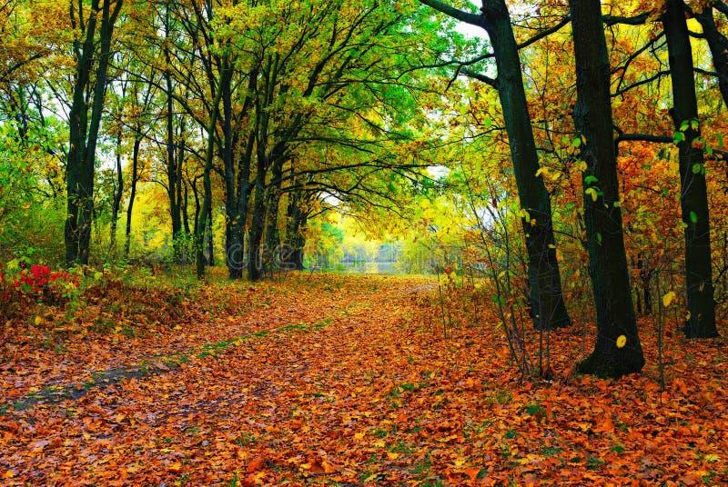 Arbres et chemin colorés d'automne photographie stock