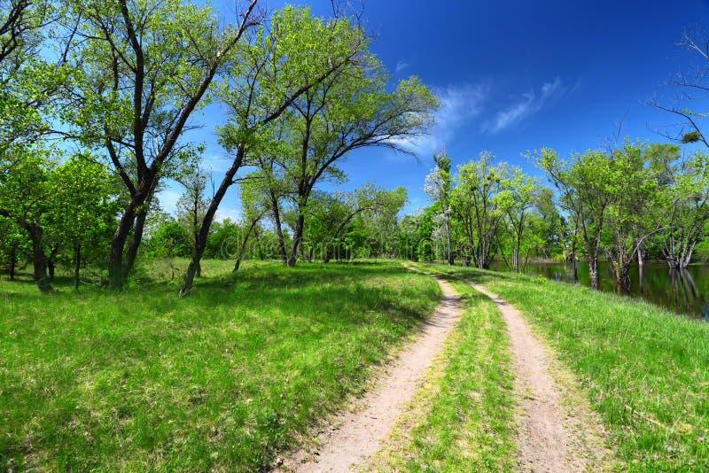 Arbres et chemin de terre verts images stock