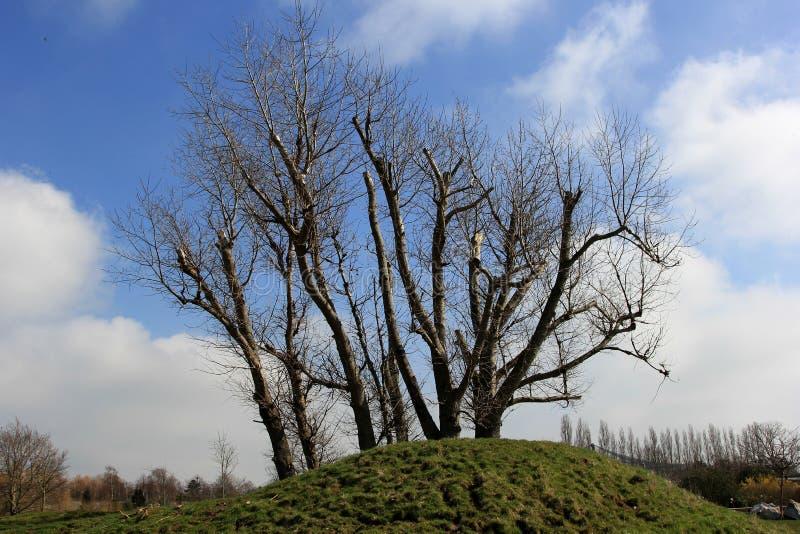 Arbres et ciel bleu photo libre de droits