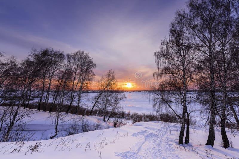 Arbres et coucher de soleil au bord d'une forêt d'hiver photo stock