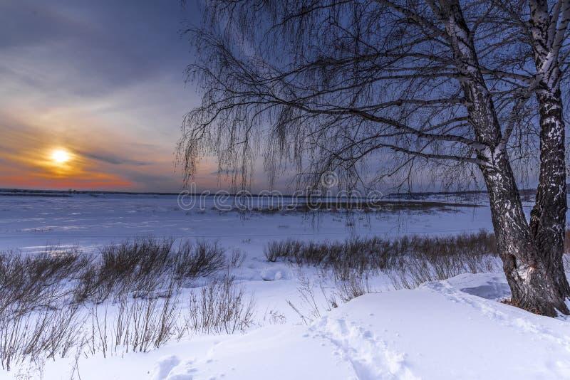 Arbres et coucher de soleil au bord d'une forêt d'hiver photographie stock libre de droits