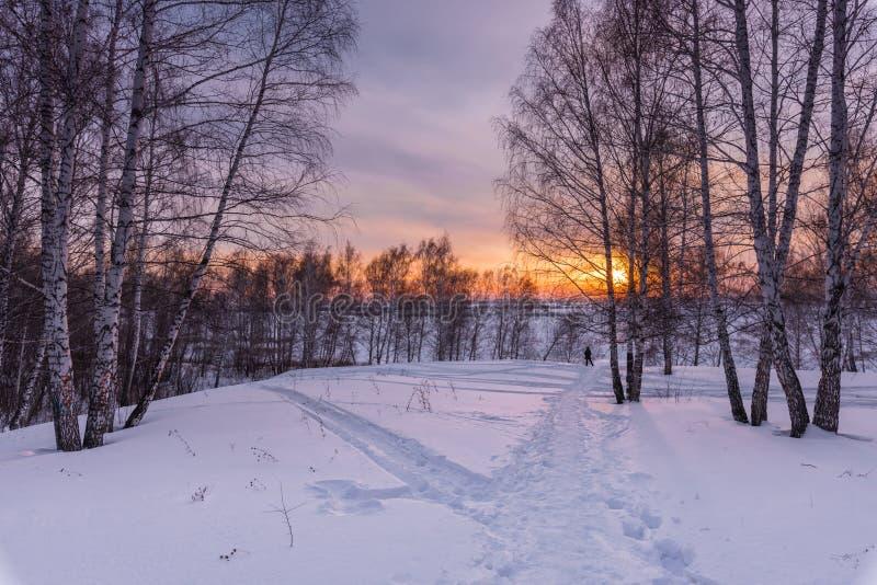 Arbres et coucher de soleil au bord d'une forêt d'hiver photos libres de droits