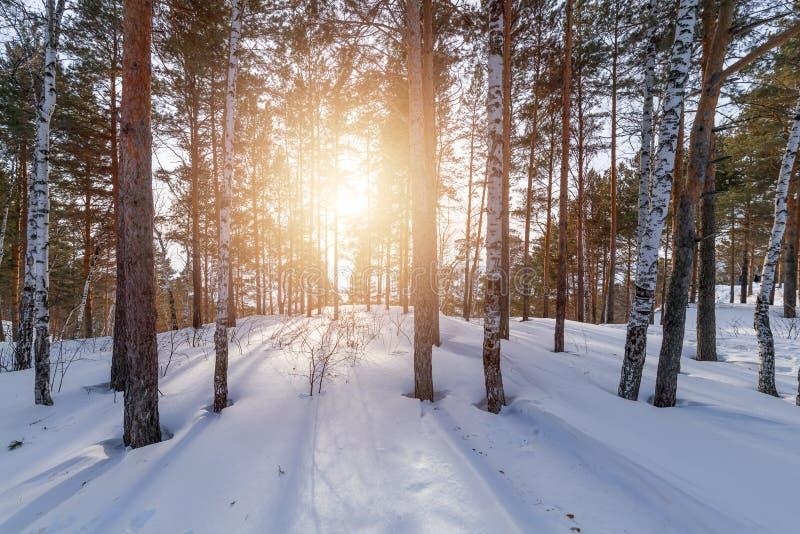 Arbres et coucher de soleil au bord d'une forêt d'hiver image libre de droits