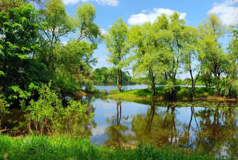 Arbres et eau verts photos libres de droits
