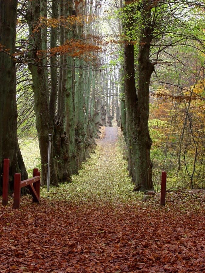 Arbres et forêt image libre de droits