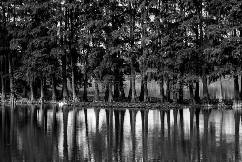 Arbres et lac noirs et blancs image libre de droits