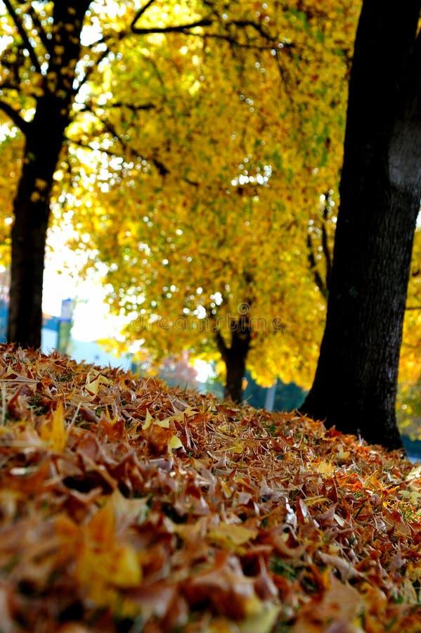 Arbres et lames d'automne photo libre de droits
