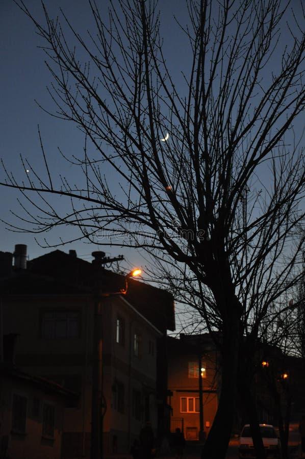 Arbres et maisons la nuit Belle lune au ciel nocturne images stock
