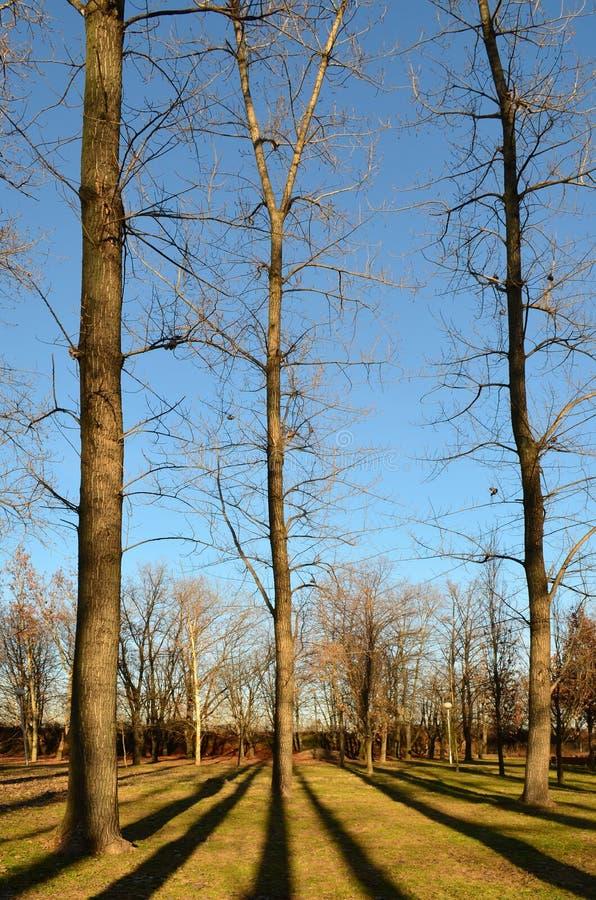 Download Arbres et ombres photo stock. Image du ombres, arbre - 56475880
